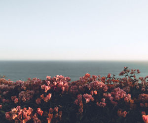 flowers, sky, and sea image