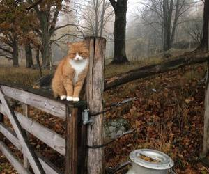 cat, autumn, and photography image