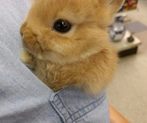 rabbit, animal, and cute image