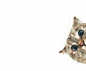 animal, background, and cat image