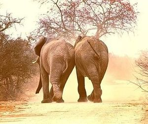 animal and elephant image