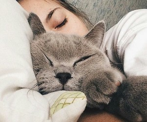 cat, beautys, and love image