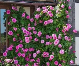 belleza, rosas, and naturaleza image