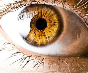 eyes, gold, and yellow image