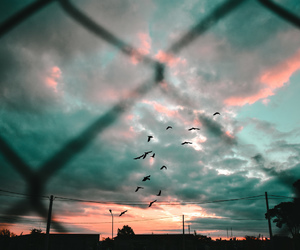 birds, pastel, and photography image