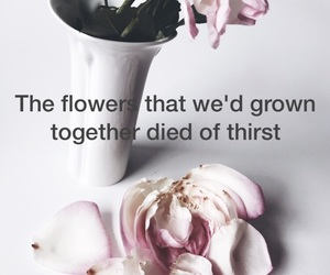 1989, quote, and rose image