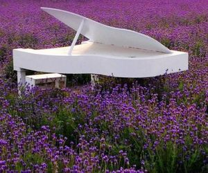 lavender, lavender fields, and white piano image