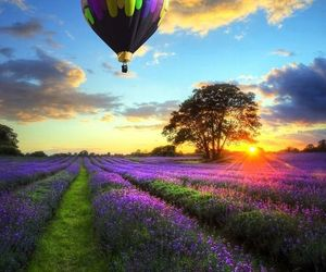 balloons, beautiful, and lavender image