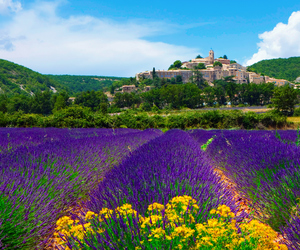beautiful, lavender, and provence image