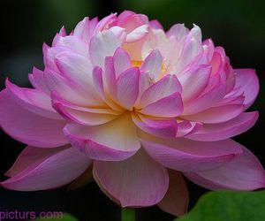 زهور, زهرة, and صور ورود image