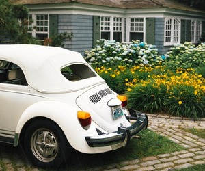 classic and flowers image