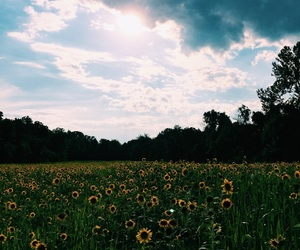 flowerfield, nature, and sunflowers image