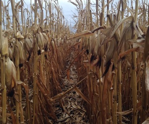 autumn, corn, and cozy image