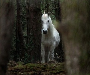 unicorn and forest image
