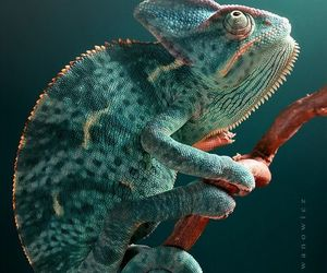 chameleon, life, and nature image