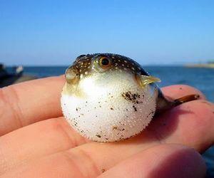 fish, animal, and baby image