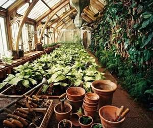 harry potter, plants, and hogwarts image
