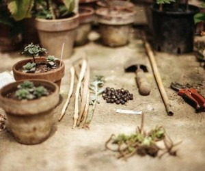 plants and gardening image