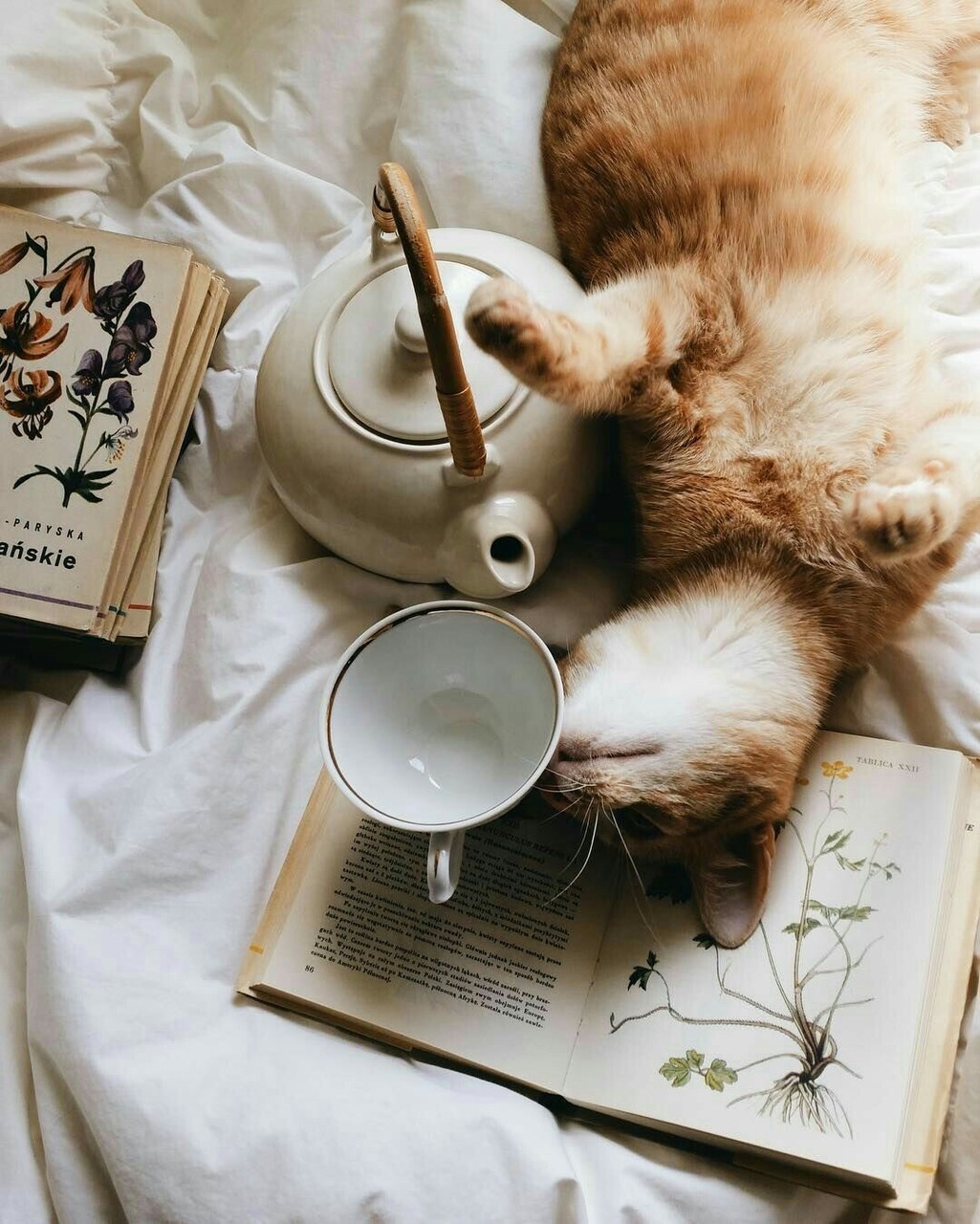 Orange cat asleep on a book with teapot on Hello Lovely