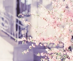 beautiful, blossom, and nature image