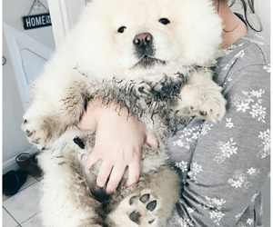 chow chow and puppy image