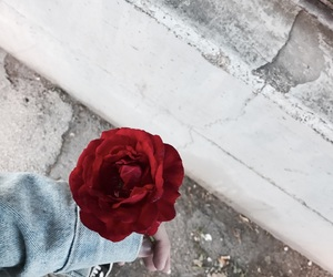 alone, old, and roses image
