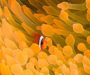 coral reef and underwater photography image