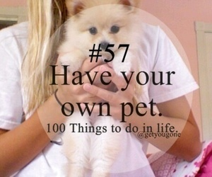 pet, 57, and 100 things to do in life image