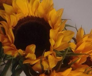 carefree, flowers, and orange image