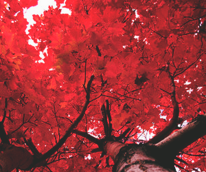 header, red, and twitter image