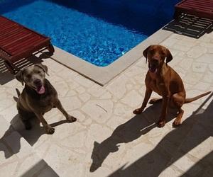 beauties, labrador, and sunshine image