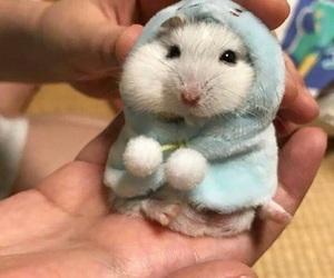 hamster and animal image