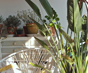 plants, green, and aesthetic image