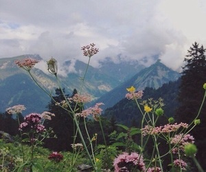 clouds, flowers, and grass image