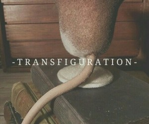 harry potter, hogwarts, and transfiguration image
