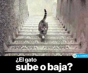 gato image