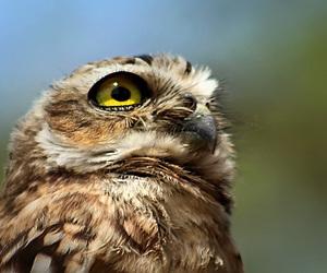 alternative, animal, and bird image