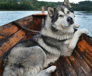 dog and boat image