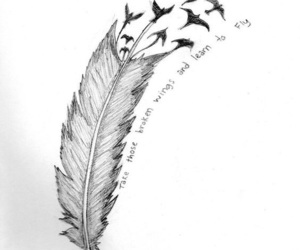 birds, feathers, and wings image