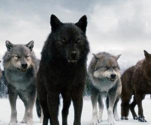 wolf, twilight, and werewolf image