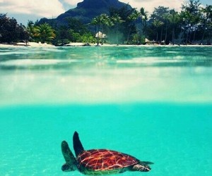sea and turtle image