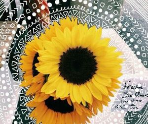 flowers, yellow, and summer image
