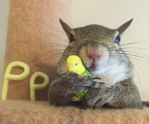 squirrel, baby animals, and birds image