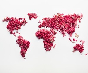 world, flowers, and travel image