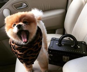 animals, pets, and dog image