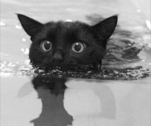 cat, swimming, and pool image