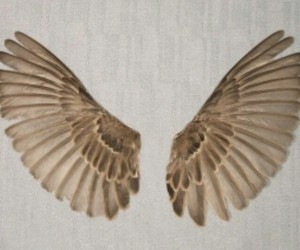 bird, tawny, and feathers image
