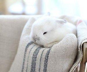 adorable, conejo, and pretyy image