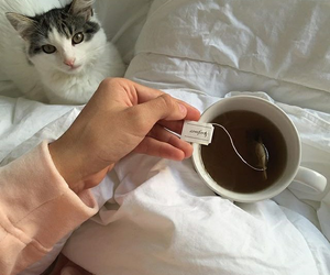 cat, indie, and tea image