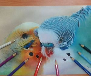 colors, draw, and birds image